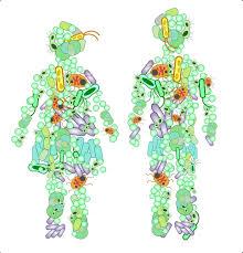 Наринэ-форте и сироп Фитолон в коррекции микробиоценоза кишечника у детей