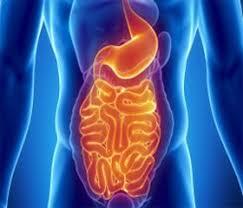 Что происходит с организмом, когда в кишечнике становится мало молочнокислых бактерий?